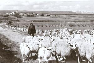 Cantalojas Prados, pastizales y herbazales  (Turismos Rural)
