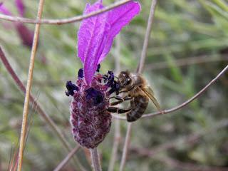 Flora Sierra Norte Guadalajara (Ecoturismo)