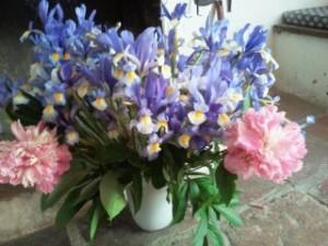 composición floral, flores de iris, flores de Lys, floración Tamajón, Flores Parque Natural Sierra Norte de Guadalajara