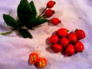 escaramujo frutos del rosal canino, escaramujo, flora sierra norte de Guadalajara